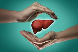 Active Liver – het reinigen van de lever - capsules – fabricant – radar