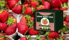 Home Berry Box - bestellen - prijs - kopen - in etos