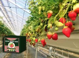 Home Berry Box - ervaringen - review - forum - Nederland