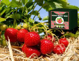 Home Berry Box - waar te koop - in een apotheek - in kruidvat - de tuinen - website van de fabrikant